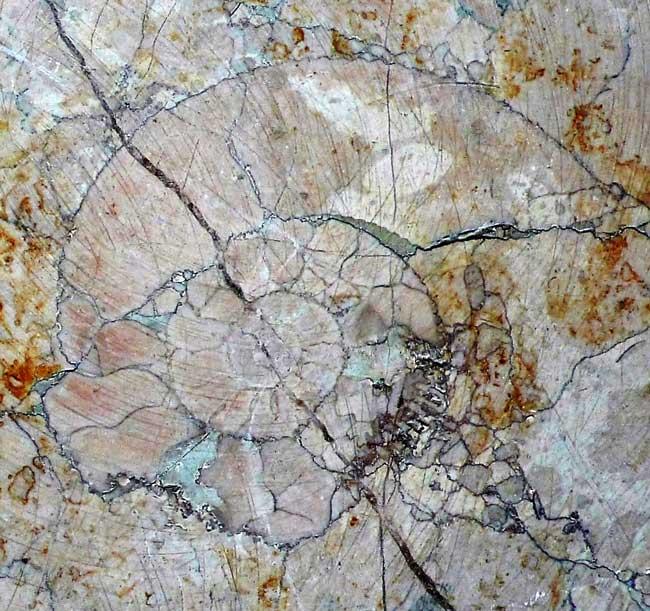 Ammonites en uno de los monumentos granadinos.