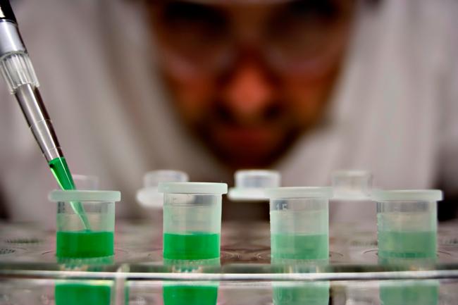 master en biología molecular y biotecnología de la UMU