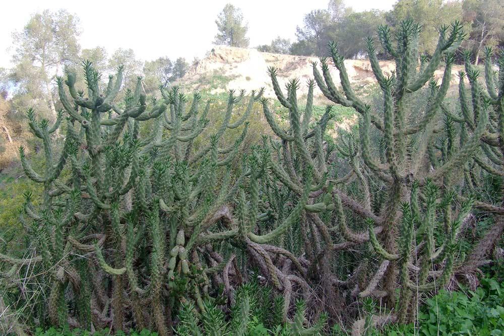 cactus-murcia