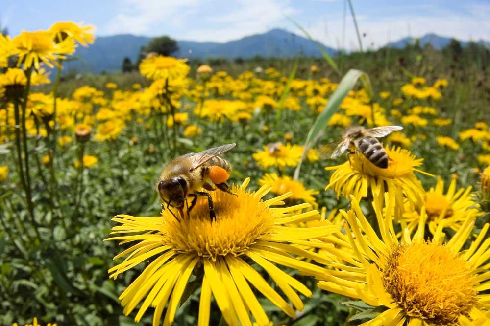 Las abejas inspiran una forma de acabar con el crimen.