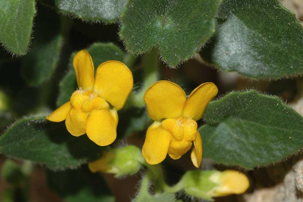 Nueva especie de plantas hallado en la Sierra de Gádor.