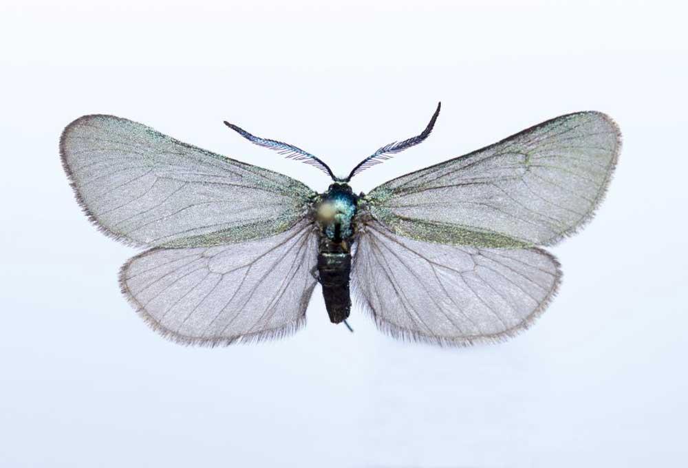 Las mariposas es una de las principales especies de estudio de este grupo de investigación.