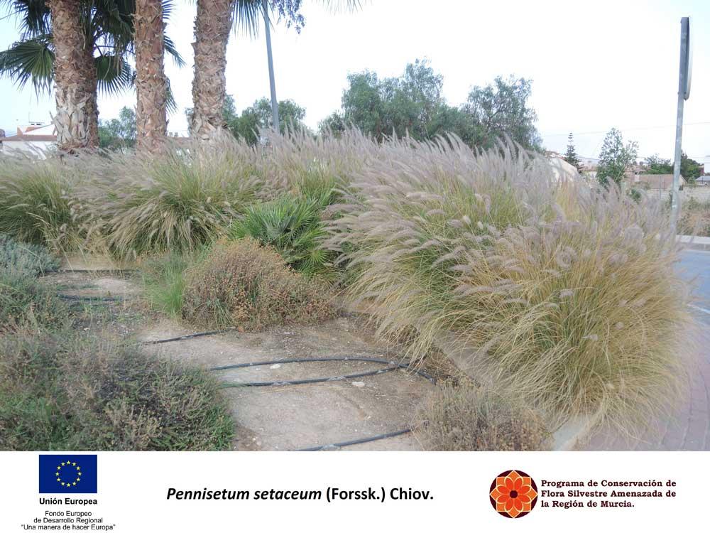 Plantas_flora-murcia