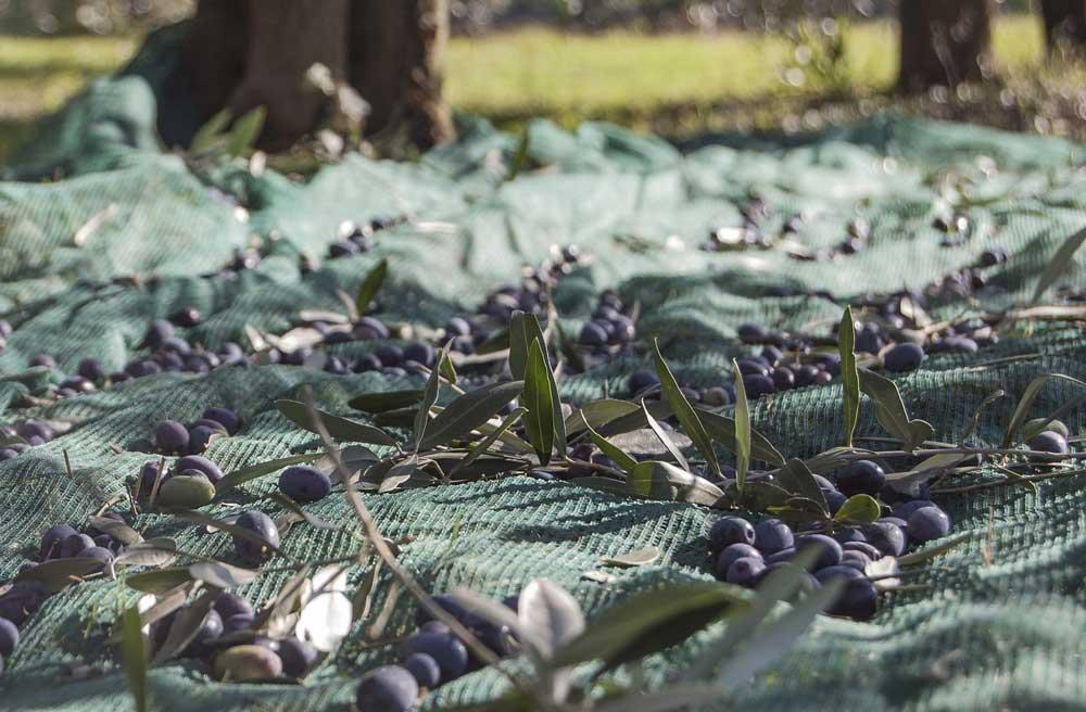 Residuos del olivar