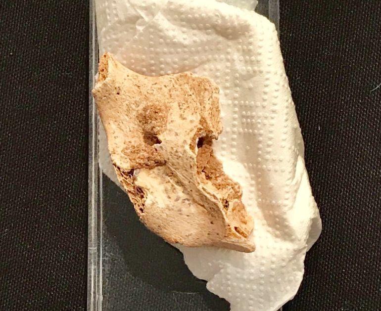Fragmento del a mandíbula de reciente hallazgo.