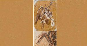 Fósil de Sapeornism que ha servido para conocer cómo volaban las aves primitivas.
