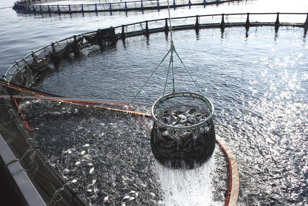 Los titulados en el máster en acuicultura podrán dirigir estas instalaciones