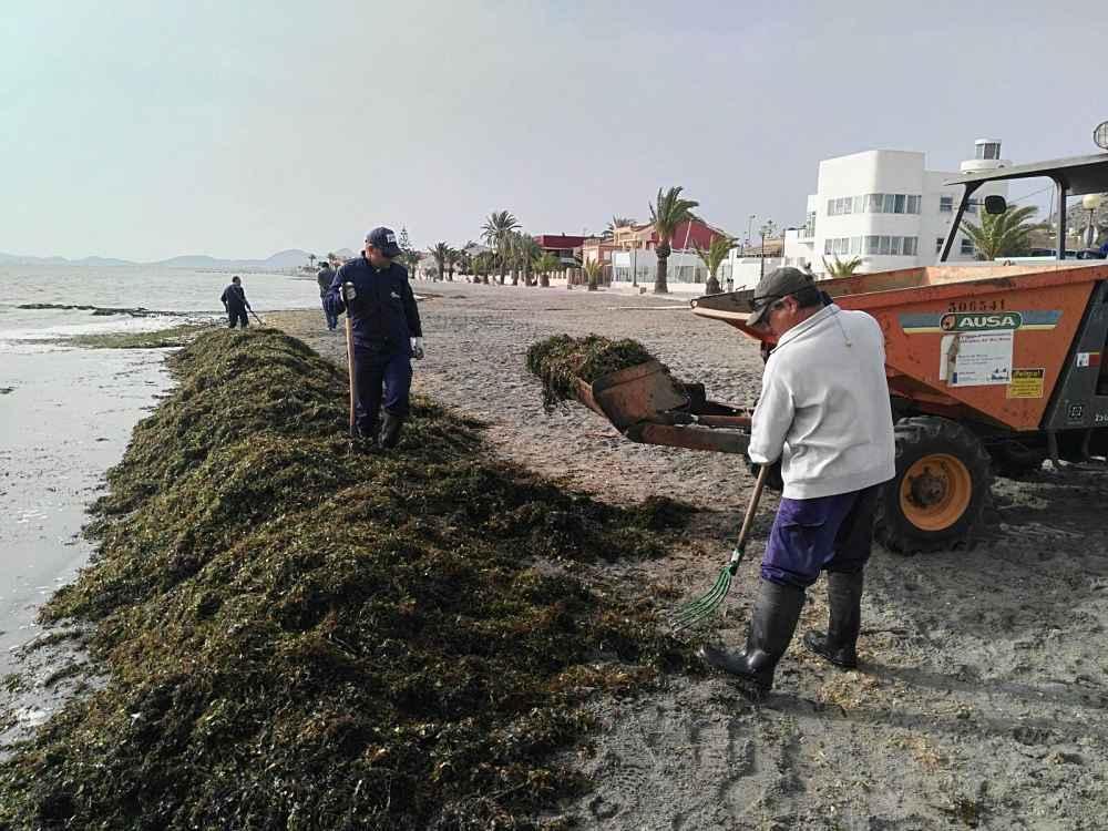 limpieza de algas en el mar menor