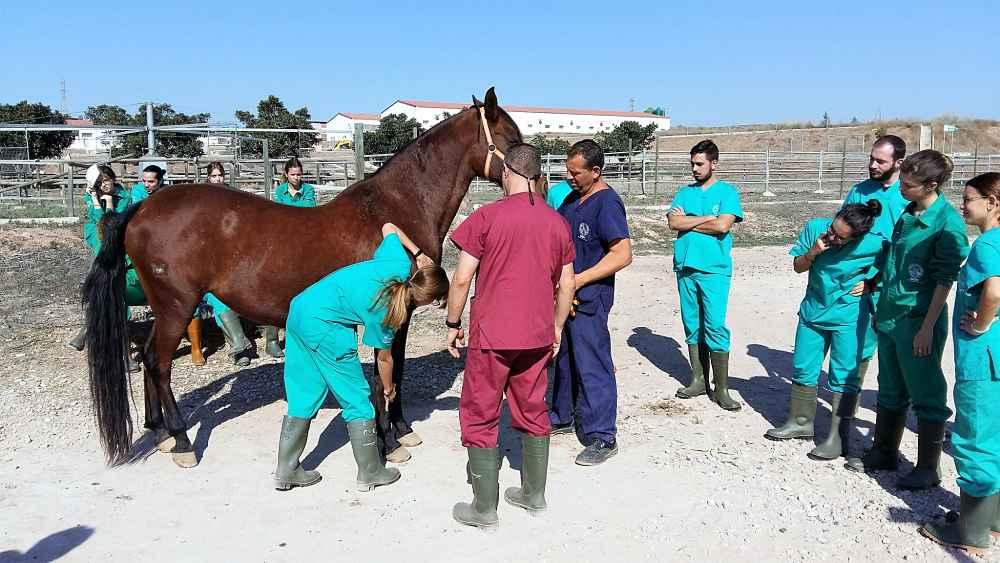 Alumnos hacen prácticas en la Granja Docente Veterinaria de la Universidad de Murcia.