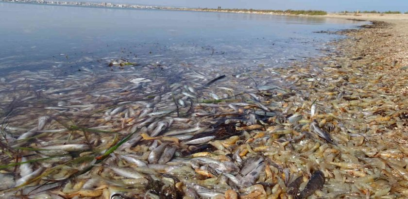 mortalidad de peces en el mar menor