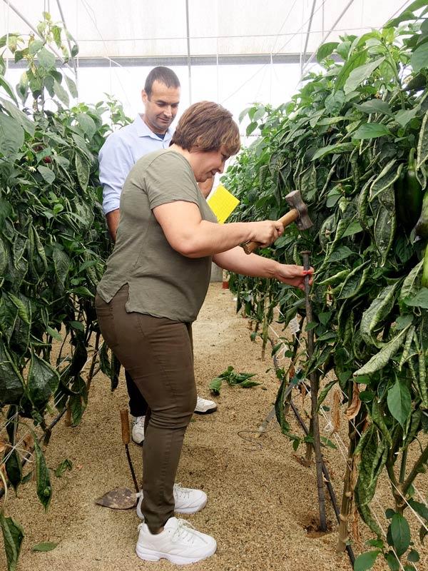 Buenas prácticas en agricultura intensiva, aprendidas en el marco de Neferetiti.