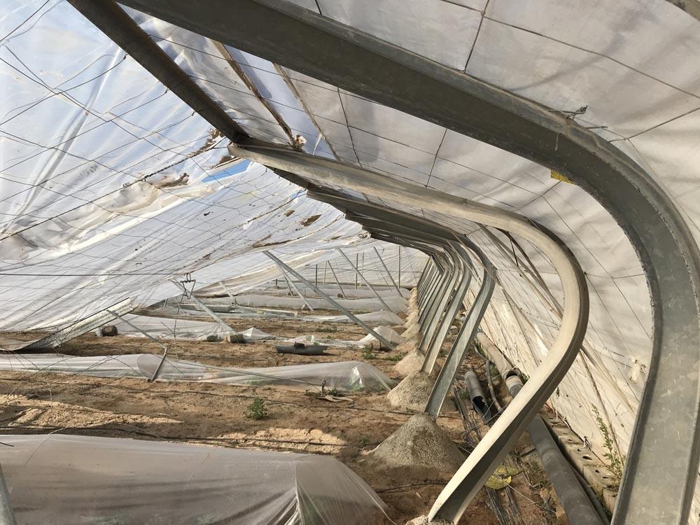 Invernadero tipo Almería colapsado tras un temporal.