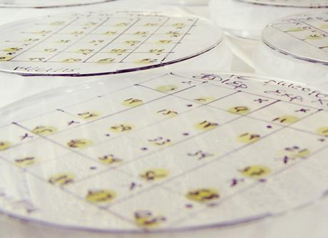 cultivo-microalgas