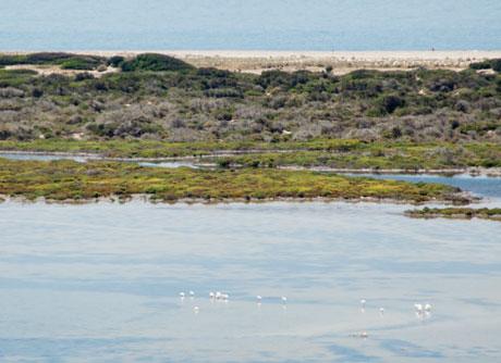Punt Entinas, uno de los humedales andaluces más singulares. Foto: Diego Arcuri.
