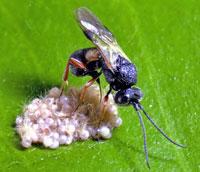 insectopredador.jpg