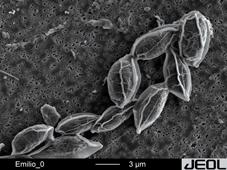 microalgas.jpg