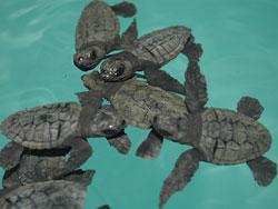 tortugasbobacrias.jpg