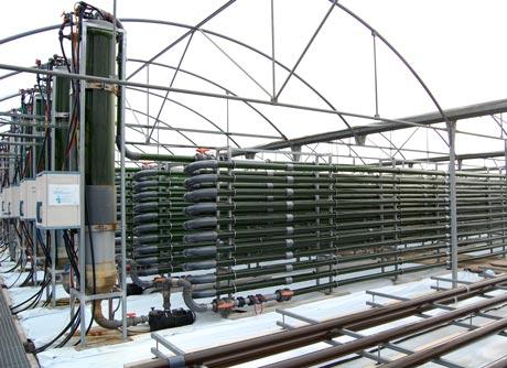 Varios de los recipientes de microalgas de la Estación Experimental de Cajamar.