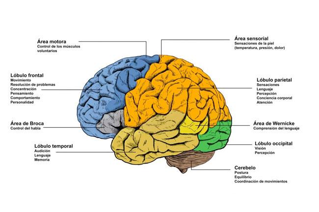 Descubre El Antidepresivo Natural Del Cerebro