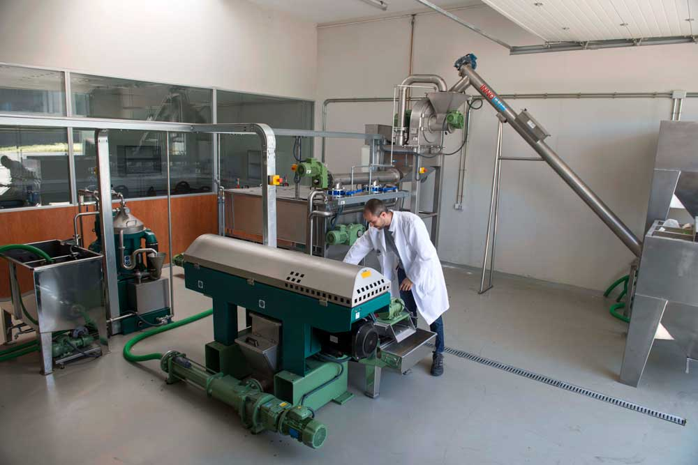 Taller de ensayo de producción de aceite de oliva.