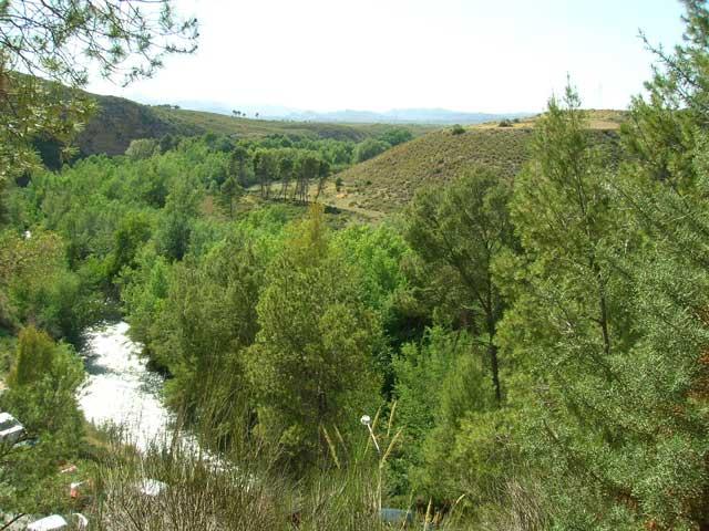Bosque de la región de Murcia.