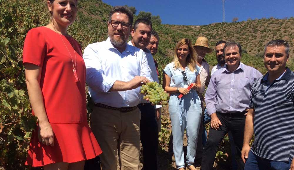 El consejero en una explotación de viñedo de El Borge.