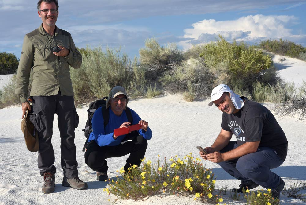 Investigadores de la UAL fotografían una planta de un entorno de yesos de Colorado.