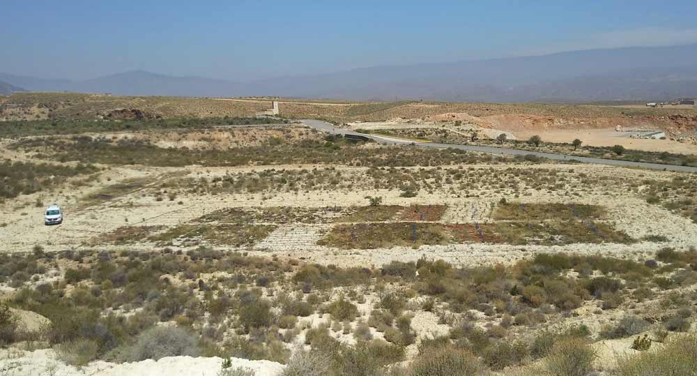 Primera cubierta vegetal en un suelo degradado de cantera sometido a renaturalización con enmienda orgánica.