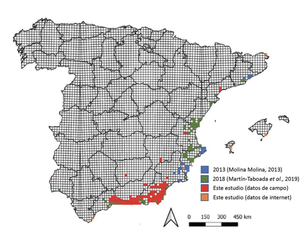 Presencia del picudo negro en las poblaciones de pitas españolas.