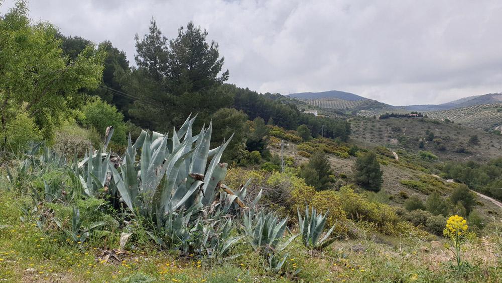 Pitas integradas en el paisaje.
